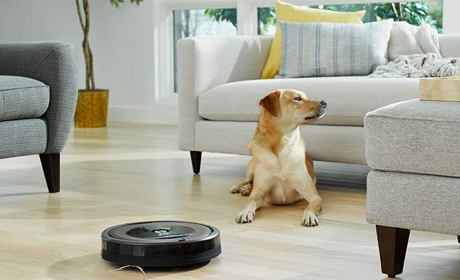 Roomba and Dog