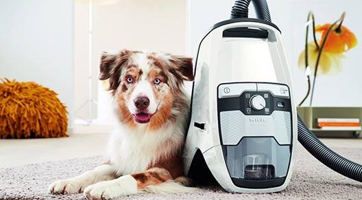 Miele Blizzard CX1 For Long Hair Dog