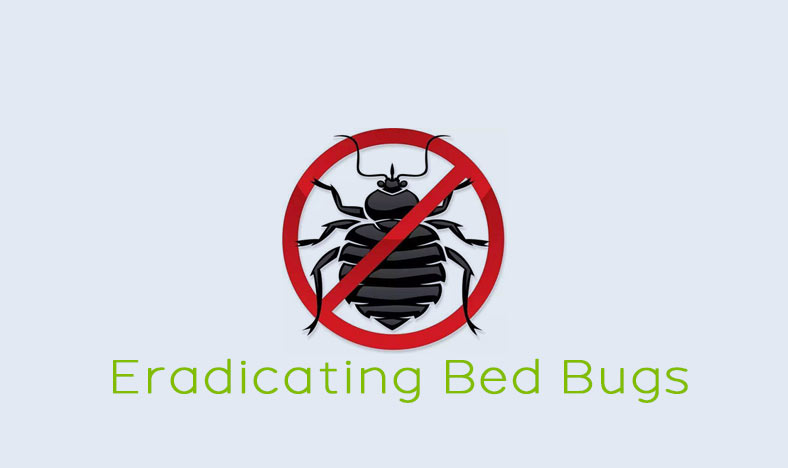 Six Steps to Eradicating Bed Bugs
